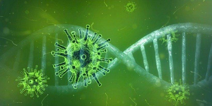 Upravljanje in delovanje podjetij v času epidemije koronavirusa
